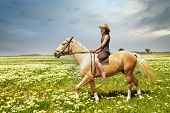 stock photo of hackney  - Woman riding on a horseback in the field with green grass - JPG