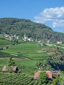stock photo of south tyrol  - the famous Wine Village of Tramin at South Tyrolean Wine Route near Merano and Bolzano - JPG