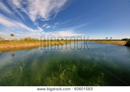Everglades Niche