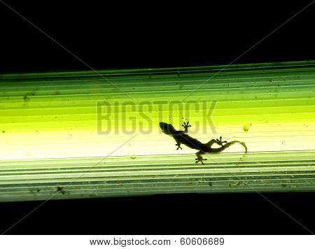 gecko in the street lamp
