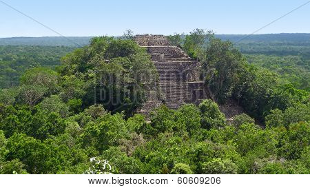 Overgrown Temple At Calakmul