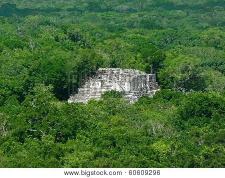 Mayan Temple At Calakmul