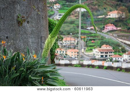 Bird of Paradise flower in the island Madeira