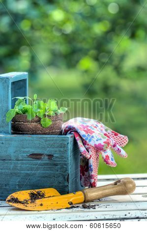 Gardening Tools In A Blue Wooden Tool Box