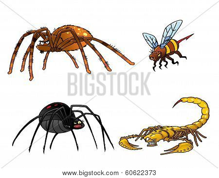 Collection Of Poisonous Insects