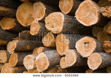 Endview Logs