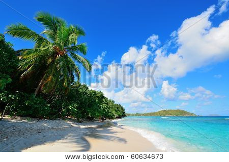 Colorful beach with coconut tree and blue sky in St John, Virgin Island.