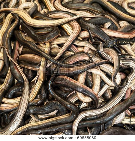 Close Up Snakes For Sale At Asian Food Market