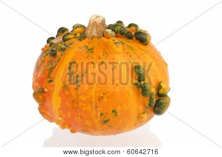 Orange Pumpkin With Green Bulbs