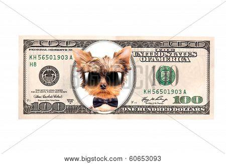 Artistic dollar bill with dog president