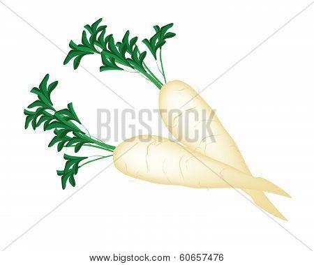 Delicious Fresh Daikon Radish On White Background
