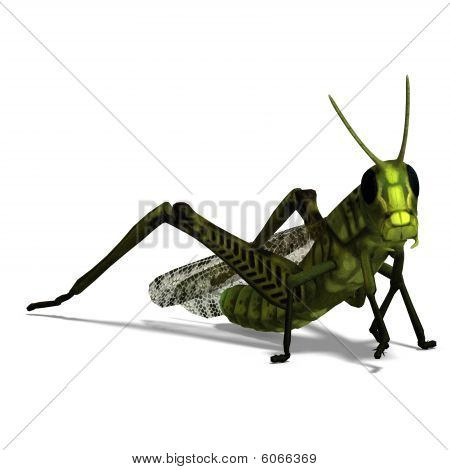 Gafanhoto verde