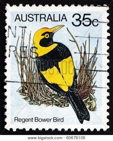 Postage Stamp Australia 1980 Regent Bower Bird, Bird