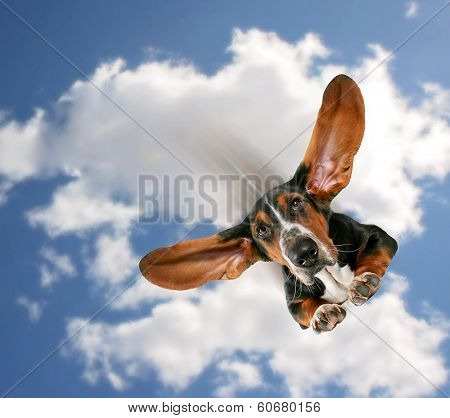 a basset hound flying through the air with his ears like a superhero