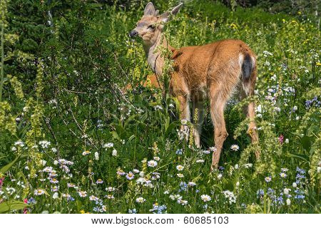 Deer Among Mountain Wildflowers