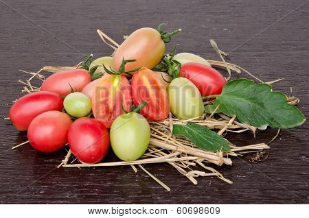 Tomatoes Style - Lycopersicon Exculentum Mill
