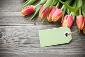 Fresh Tulips And Tag