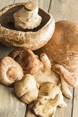 picture of portobello mushroom  - A group of assorted mushrooms including portobello shiitake and oyster mushrooms - JPG