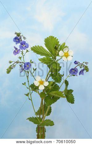Wild Flower Sky