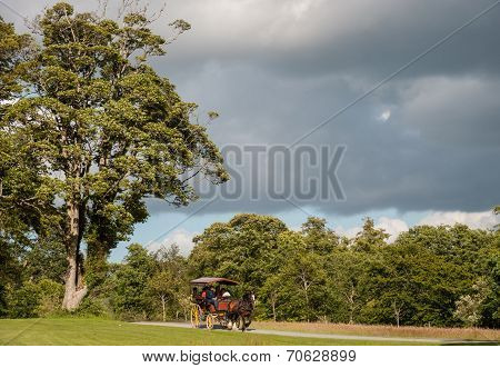 horse and cart Killarney national park
