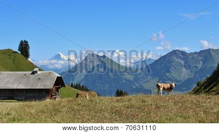 Farm And Niesen