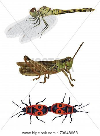 Amazing nature set - insects