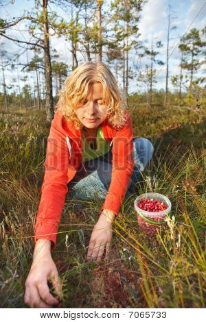 Woman Picking Wild Organic Cranberries