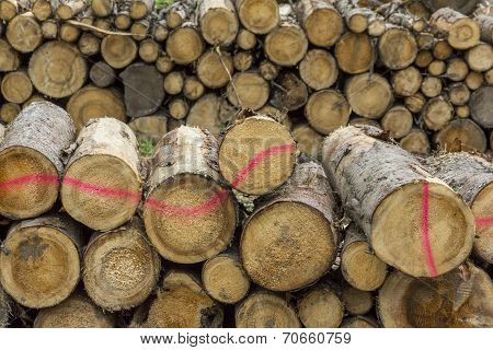 Logs Of Wood Stacked In A Saw-mill
