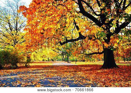 Golden Autumn In Park - Full Of Yellow & Orange Leaves