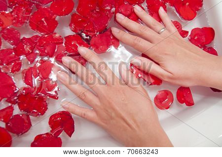 Hands Spa - Woman Palm, Water And Rose Petals