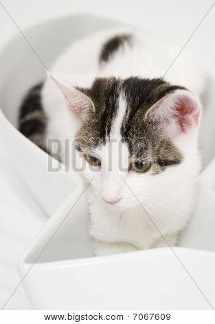 White Cat With Spots In Fish-shaped Dish