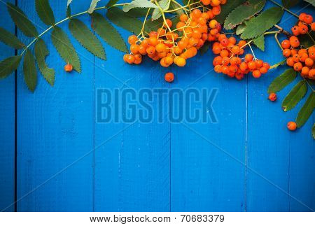 Autumnal Background Rowan Fruits Blue Wooden Board