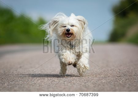 Fast Dog