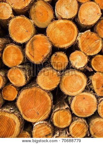 Pile Of Cut Treetrunks