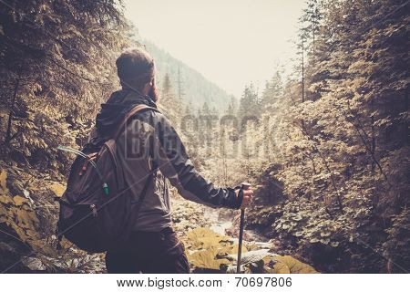 Man with hiking equipment walking in mouton forest