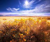pic of prairie  - Prairie  landscapes - JPG