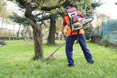 image of trimmers  - Man Working With Hedge Trimmer in a park - JPG