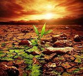 foto of dead plant  - Green plant growing trough dead soil - JPG