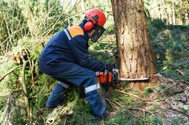 pic of man chainsaw  - Lumberjack logger worker in protective gear cutting firewood timber tree in forest with chainsaw - JPG