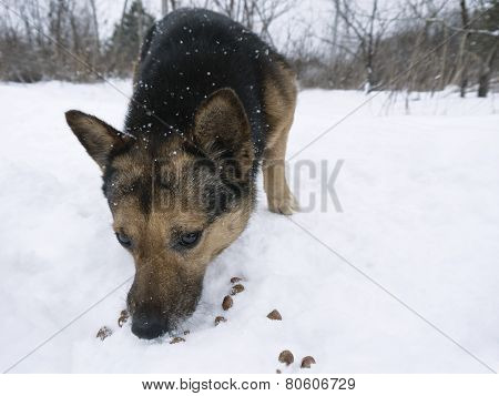 Dog Picking Up Food