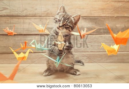 Little Kitten Playing With Colorful Origami Birds