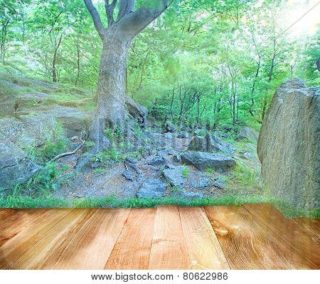 Big Rock And Big Tree In Park With Wooden Oak Floor
