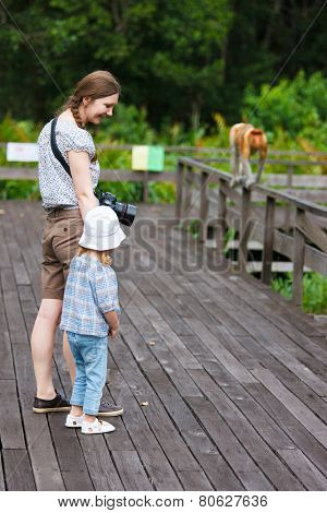 Mother and daughter looking at  proboscis monkey on Borneo island in Malaysia