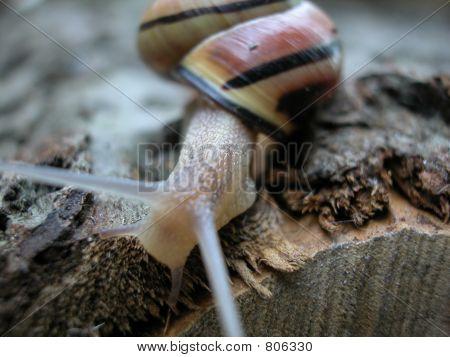 Solitary Slug