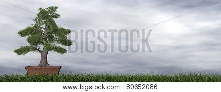 Temple juniper tree bonsai - 3D render