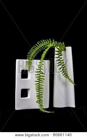 Vases and fern