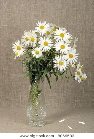 Bouquet With White Camomiles