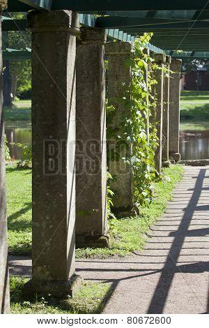 Pergola twined greens. Oranienbaum (Lomonosov). Upper park.