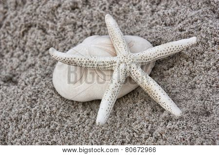 starfish and sand biscuit on the sand