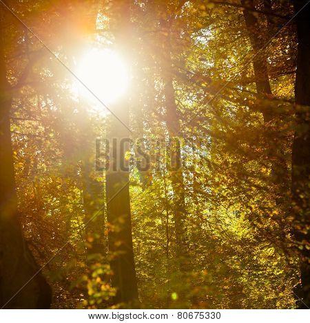 Sunbeams Trough Trees In Park